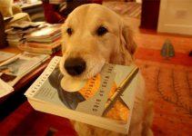 Los mejores libros de perros.