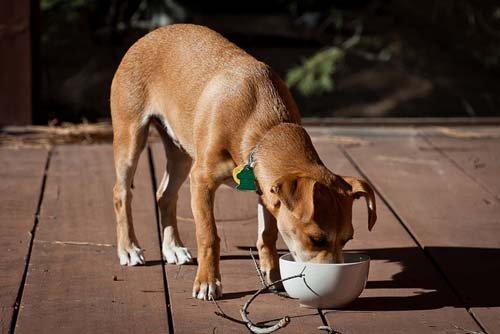 Cuando debe comer un perro