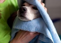 secado del perro