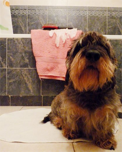 perro listo para baño