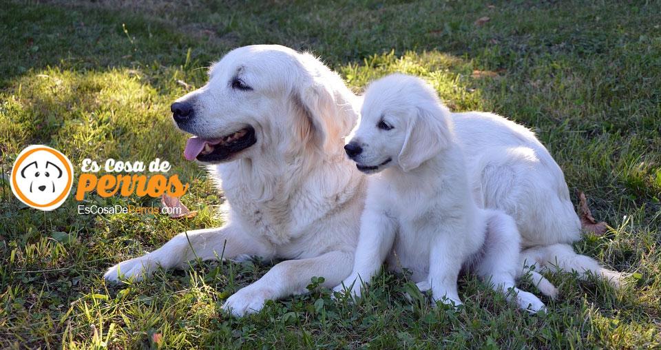 cachorro destete
