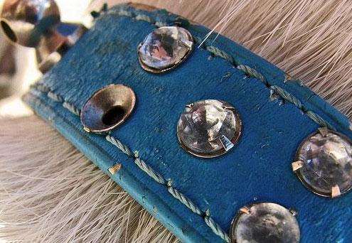 collar de diamantes de perro