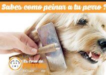 como peinar a tu perro