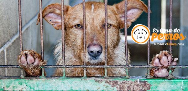 residencia canina perro