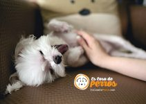 masaje a perro