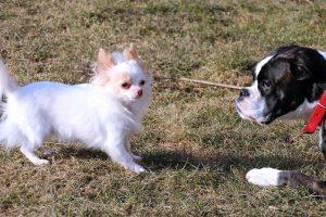 perros nacho y mosca