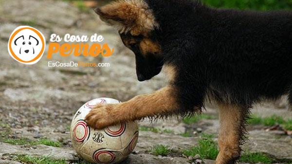 perro jugando con balon
