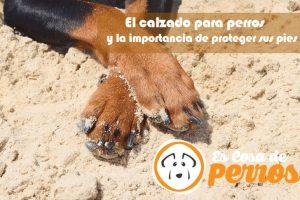 El cuidado de las patas el perro
