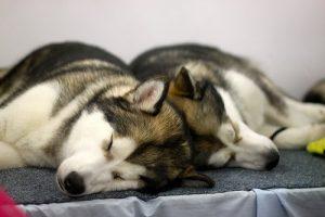 residencias caninas.