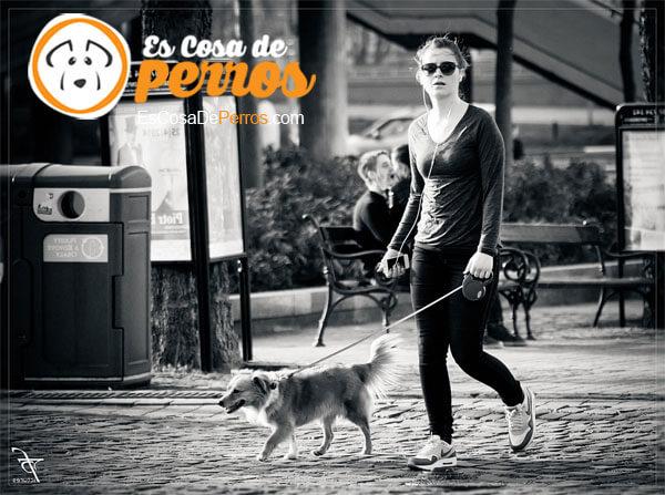 perro por la calle