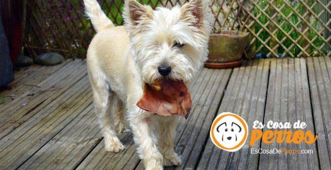 perro y la comida
