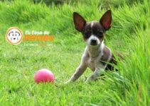 perro en adopcion