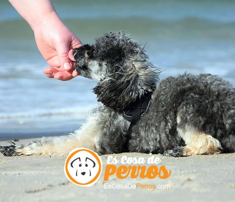 perro chupando mano