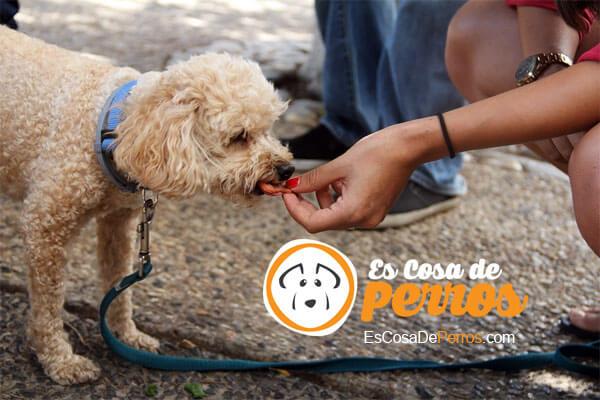 perro comiendo en la mano