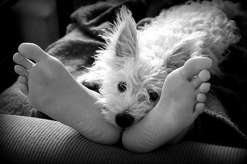 perro en los pies