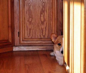 perrito escondido