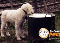 perro y leche mala