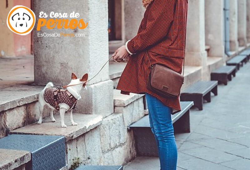 multar por perro en la calle
