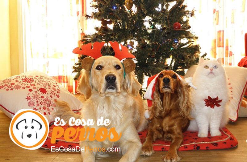 perros en navidad