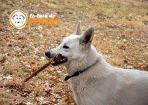 perro con palo