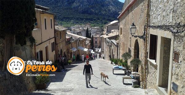 perro paseando calle