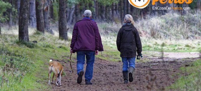 perro paseando