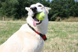 perro jugando con pelota