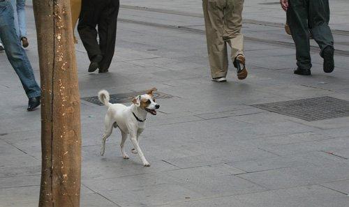 perro-perdido-ciudad