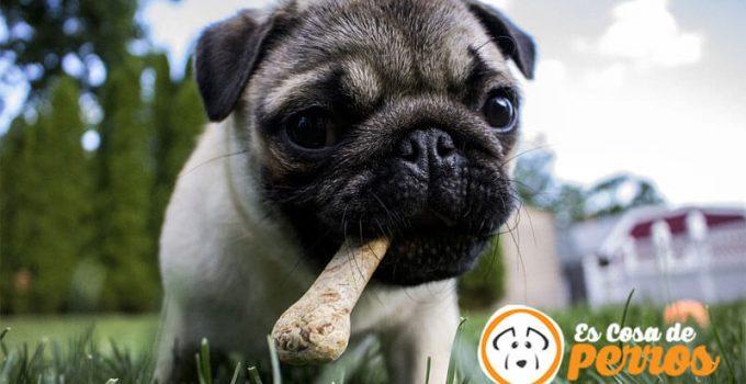 premio para perro de hueso