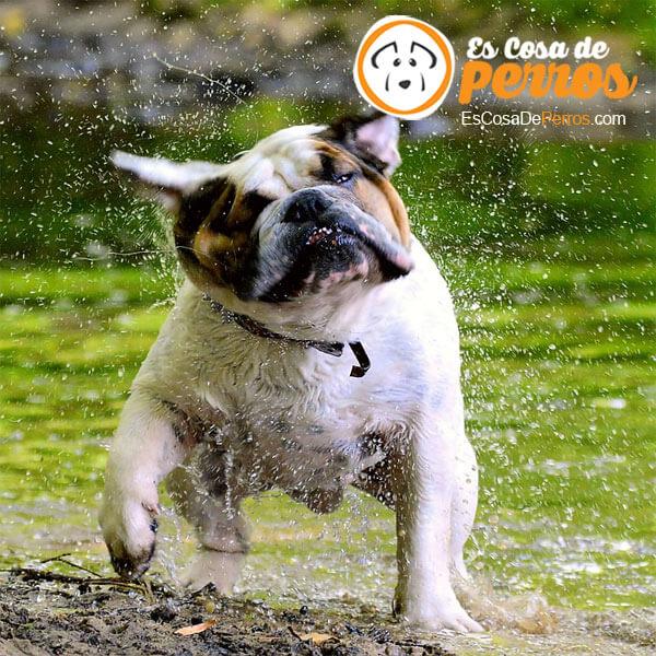 perro sano calcio y fosforo