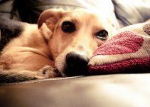 como enseñar a los perros a no subirse al sofa