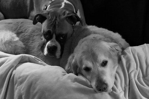 perro triste en casa