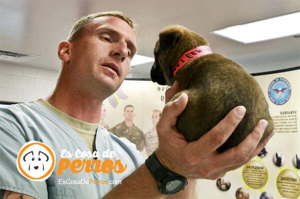 perro veterinario