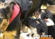 perros amamantando