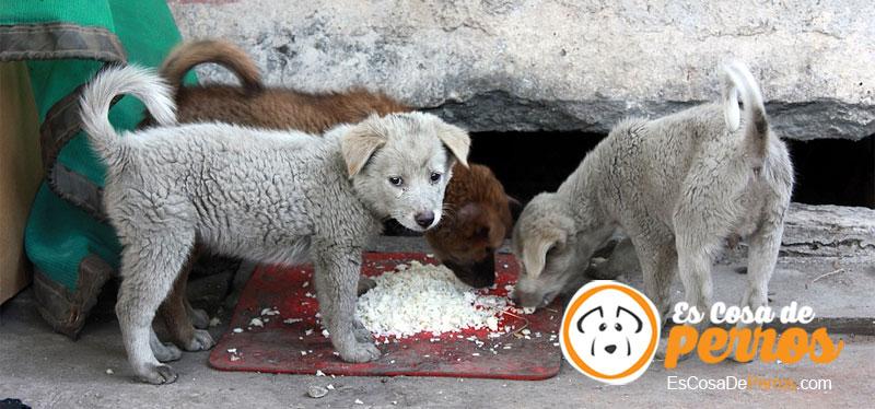 perros comiendo