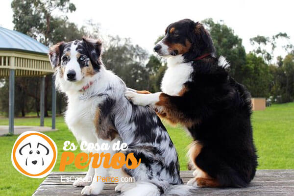 perros dandose masaje