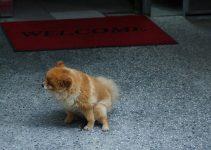 perro meando